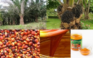 palm oil graphics